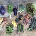 Organic Mixed Vegetable Share