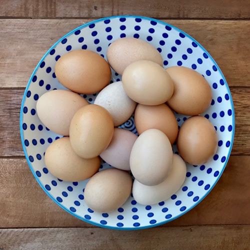 **Chicken Fertile Eggs (Soy-FREE), 1 Dozen
