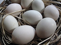 Duck Eggs per dozen