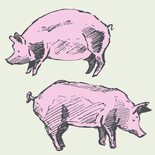 Two Pig Bundle 20% DEPOSIT (Avg. 300lb)